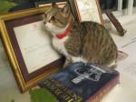 """""""Страж"""" книги и сертификата от королевы Великобритании"""
